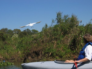 Kayaker flushes as wading bird