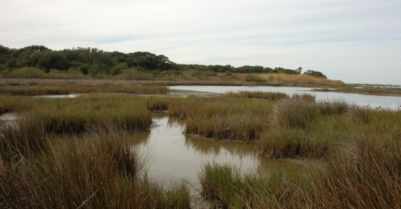 Estuarine or Tidal Fringe Wetlands Copano Bay